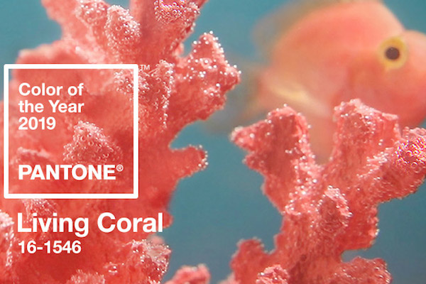 Living Coral 2019 Color of the Year (image: Pantone)
